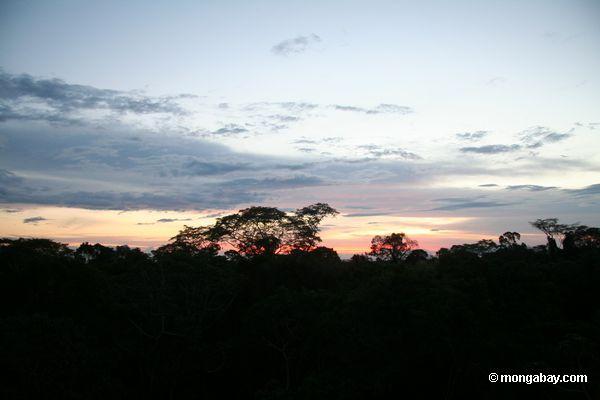 Закат над балдахином в тропических лесах Перу