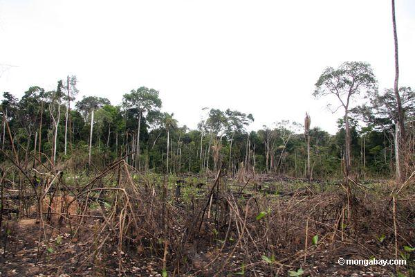 Agricultural benefits of deforestation are short-lived