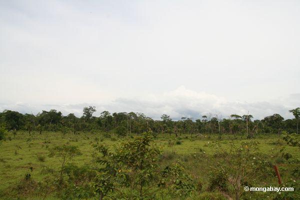 обезлесения для скота пастбища вблизи Пуэрто maldanado