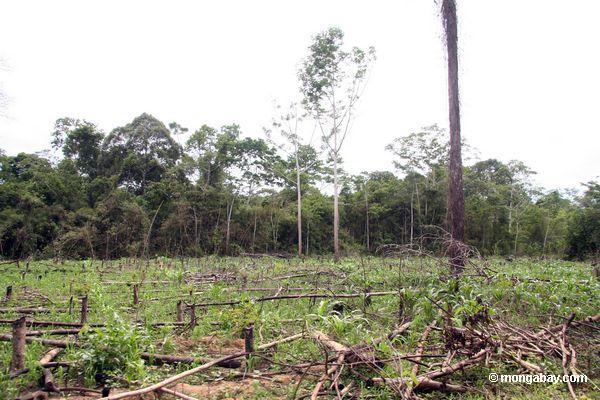 http://www.mongabay.com/images/peru/tambopata/Tambopata_1030_5149.JPG
