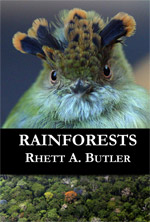 Rainforest book for kids
