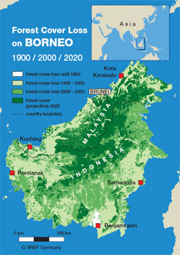 Deforestation in Borneo by Palm Oil plantations. Hate ...