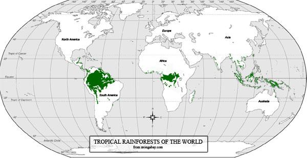 Trópusi esőerdők nevei