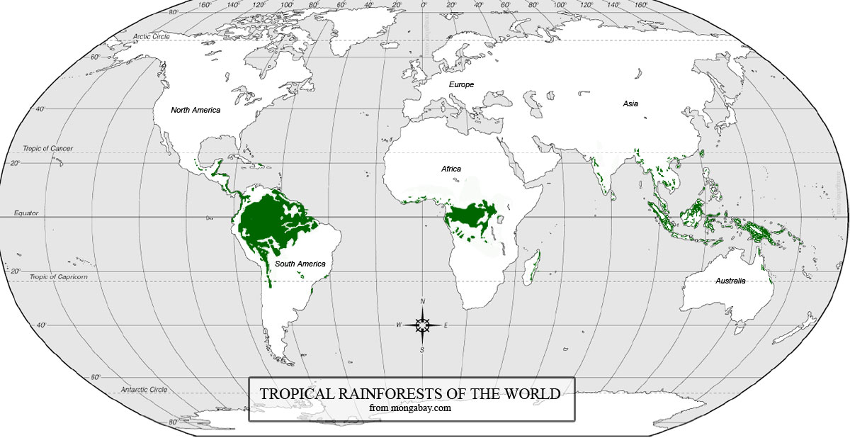 Where are rainforests found?