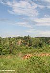 Wood along a road in Uganda