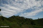 Deforested hills near Bwindi