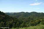 Rain forest hills of Bwindi