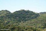 Bwindi rainforest