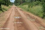 Colorful butterflies surround every pothole puddle for miles along this stretch of road in Uganda