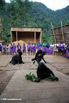 Gorilla dance performed by Bwindi orphans