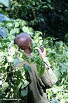 Gorilla tracking guide in Bwindi