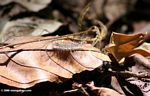 Caterpillar in the forest leaf litter