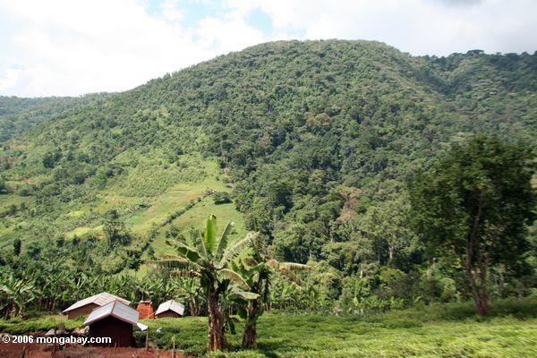 Limite Impenetrable do parque nacional de Bwindi