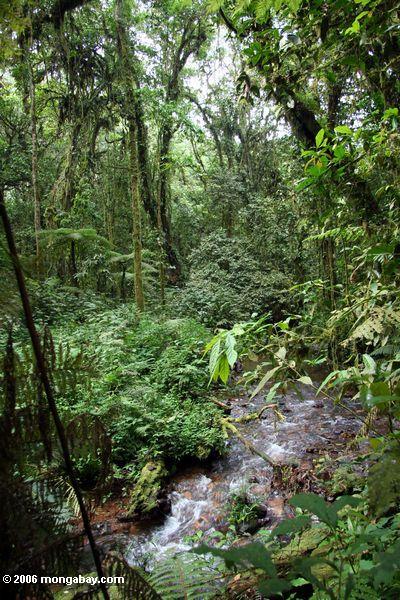 Bwindi undurchdringlicher Nationalpark