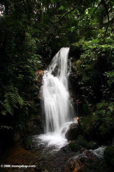 Waterfall in Bwindi