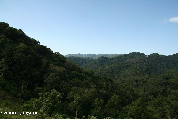 Forest in Bwindi Impenetrable National Park, Uganda. Photo by: Rhett A. Butler.