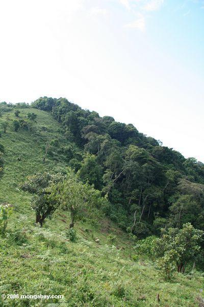 Deforestation along the boundary of Bwindi Impenetrable National Park