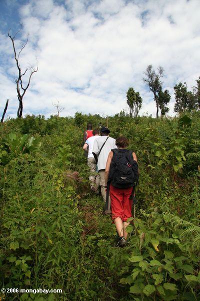 Touristen, die aufwärts gehen Gorillas Bwindi