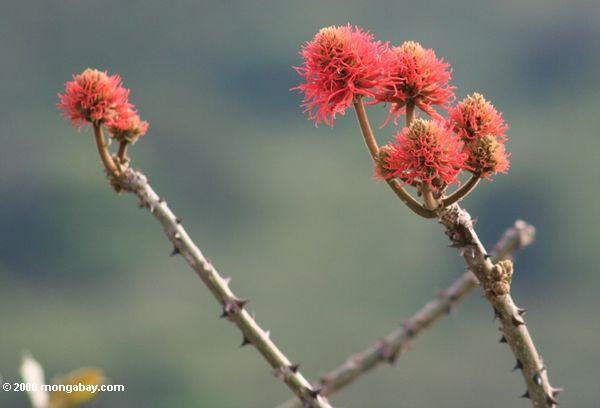 Rot-orange Blumen, die aus Baumniederlassung Fort-