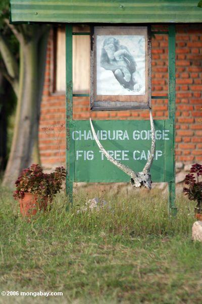 Gorge de Chumbura acampamento da árvore