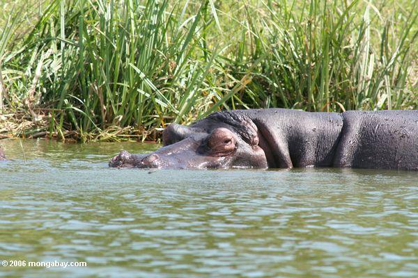 Календарь мероприятий в shallows из kazinga канал