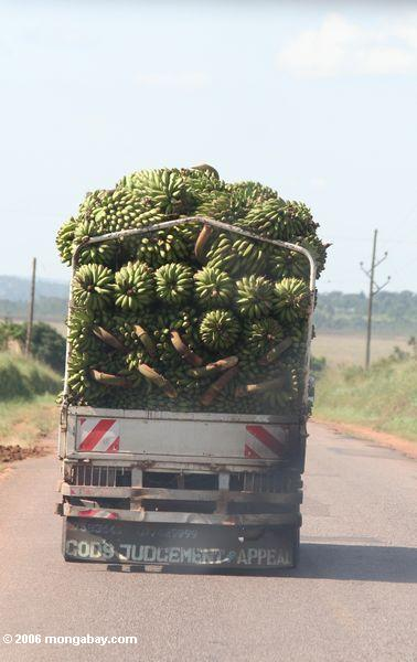 Truckload das bananas dirigidas ao mercado