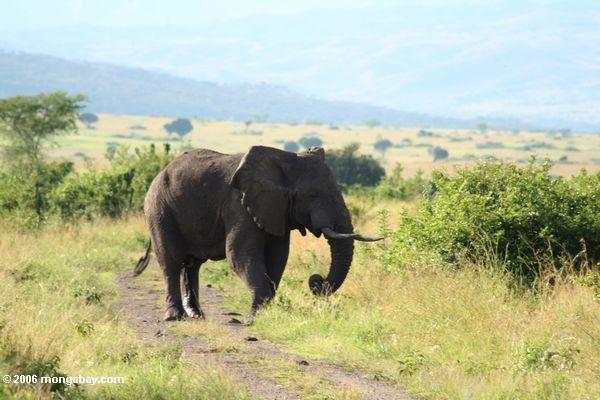 Afrikanischer Nationalpark