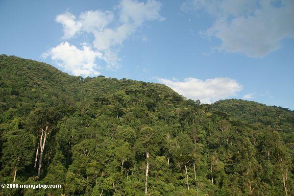 Bwindi tropischer Wald