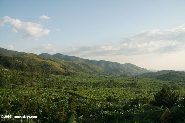 Montes e plantações da banana