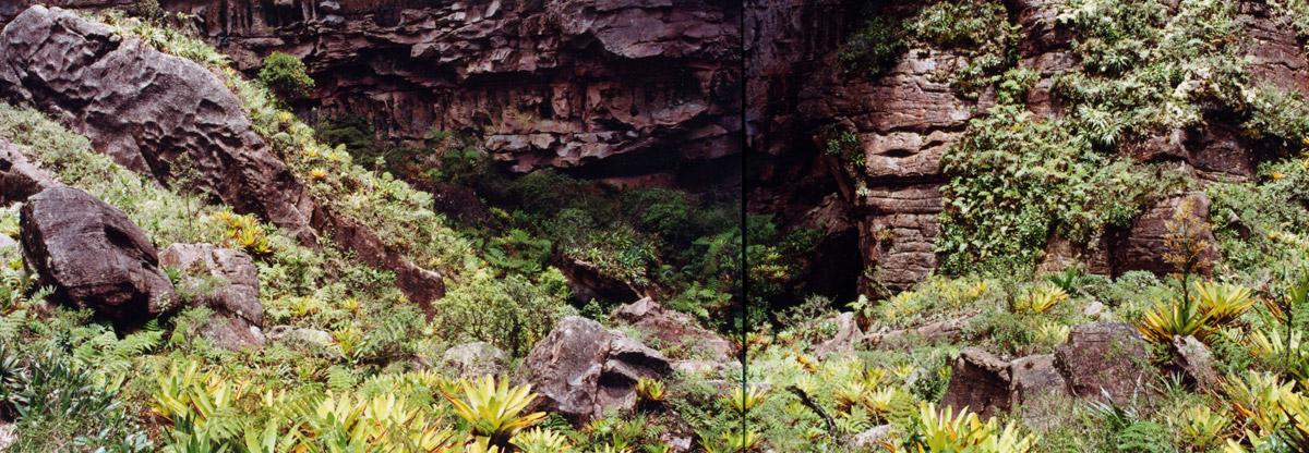 bromeliad саду недалеко от саммита auyantepui