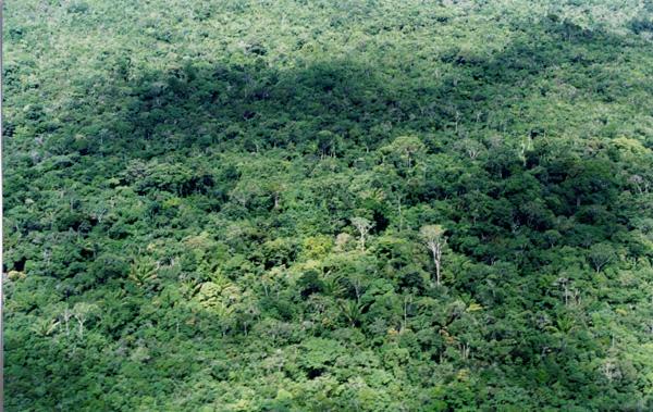 Rainforest in Venezuela