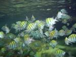 Fish Cancun, Mexican Riviera, Mexico