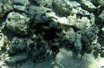 Boxfish Cancun, Mexican Riviera, Mexico
