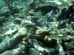 School of fish Cancun, Mexican Riviera, Mexico