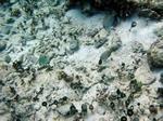 Caribbean reef Cancun, Mexican Riviera, Mexico