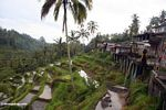 Tegallantang Rice fields (Ubud, Bali)