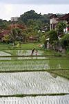 Father and daughter preparing to fish in a rice paddy (Ubud, Bali)