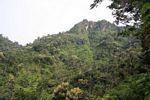 Agroforestry (Java)