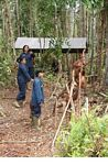 Workers with Orangutans at the Orangutan Care Centre and Quarantine in Pangkalan (Kalimantan, Borneo (Indonesian Borneo))