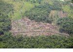 Aerial view of deforested jungle in Borneo (Kalimantan, Borneo (Indonesian Borneo))