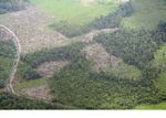 Aerial view of rainforest that has been slash-and-burned for agriculture (Kalimantan, Borneo (Indonesian Borneo))