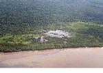Mangrove-kliring di Borneo (Kalimantan, Borneo (Borneo Indonesia))