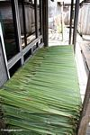 Nipa palm frons cut for roofing material (Kalimantan, Borneo (Indonesian Borneo))
