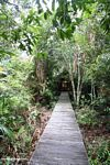 Boardwalk to Rimba Lodge (Kalimantan, Borneo (Indonesian Borneo))