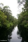 The blackwater river to Camp Leaky (Kalimantan, Borneo (Indonesian Borneo))