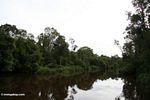 Seikonyer River (Kalimantan, Borneo (Indonesian Borneo))