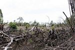 Section of rain forest that has been cut for subsistence agriculture in Borneo (Kalimantan, Borneo (Indonesian Borneo))