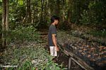 Villager employed at the reforestation project in Tanjung Puting National Park (Kalimantan, Borneo (Indonesian Borneo))