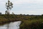 Deforested peat swamp (Kalimantan, Borneo (Indonesian Borneo))