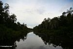 Reflection of forest in the Seikonyer River (Kalimantan, Borneo (Indonesian Borneo))